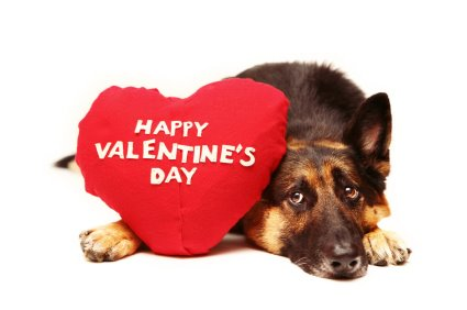 Image result for Valentines Animals