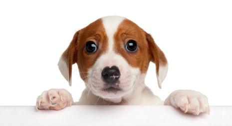 Anxious Puppy Anxious puppy