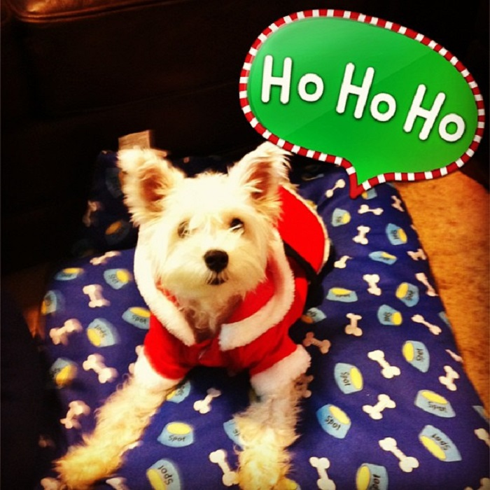 A Dog's Letter to Santa Paws