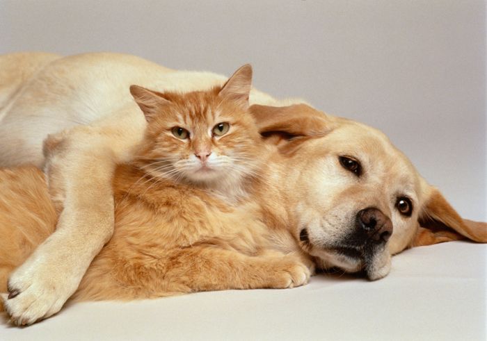 Comparison between dogs and cats