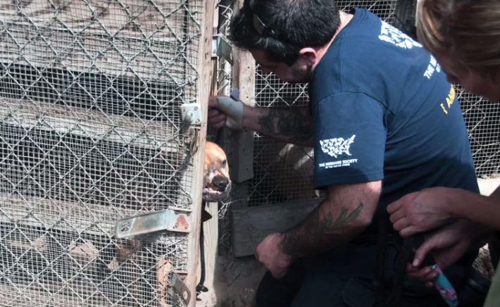 Meet Sam, a dog rescued from a dog fighting ring