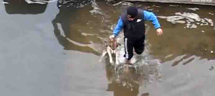 Terrified Dog Expresses Happiness and Gratitude After Being Rescued from Icy Water