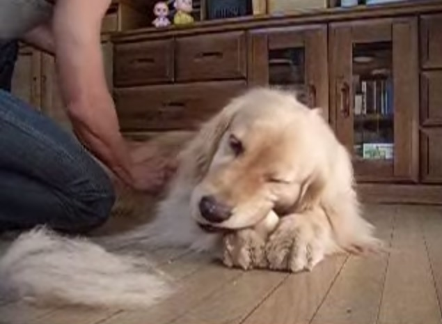 This dog owner found something fun to do when his dog shed so much hair