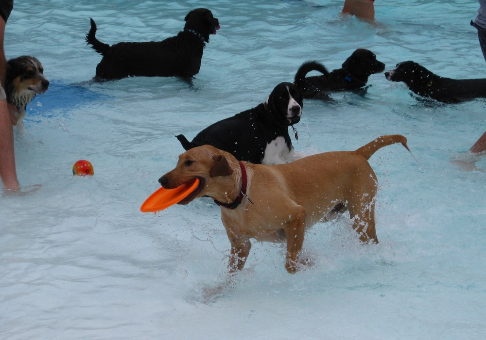 Before the city pool closes for the year, they open it to dogs