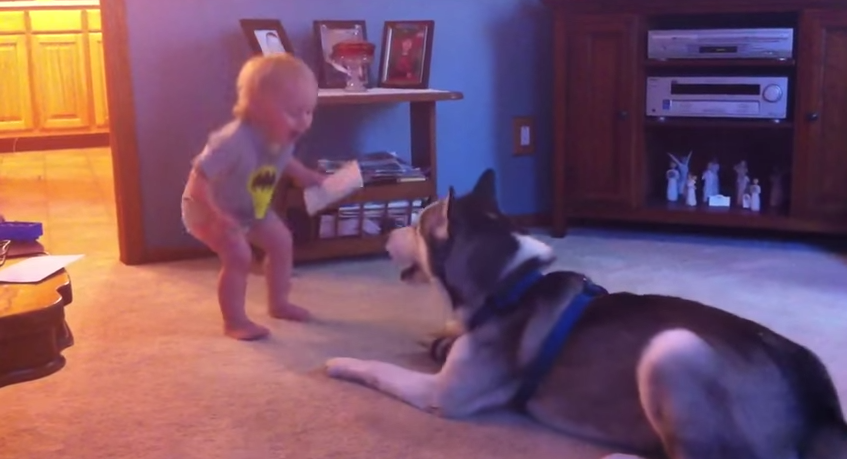 Adorable Baby Yells And Giggles, The Husky Response Is Adorable