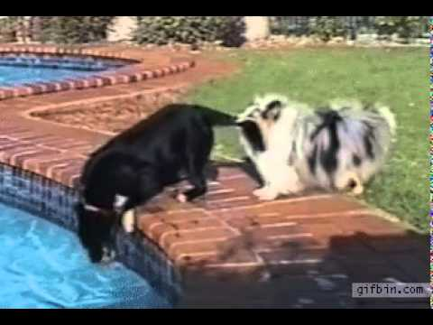 These Dogs Found the Best Way to Retrieve a Ball from the pool without getting wet