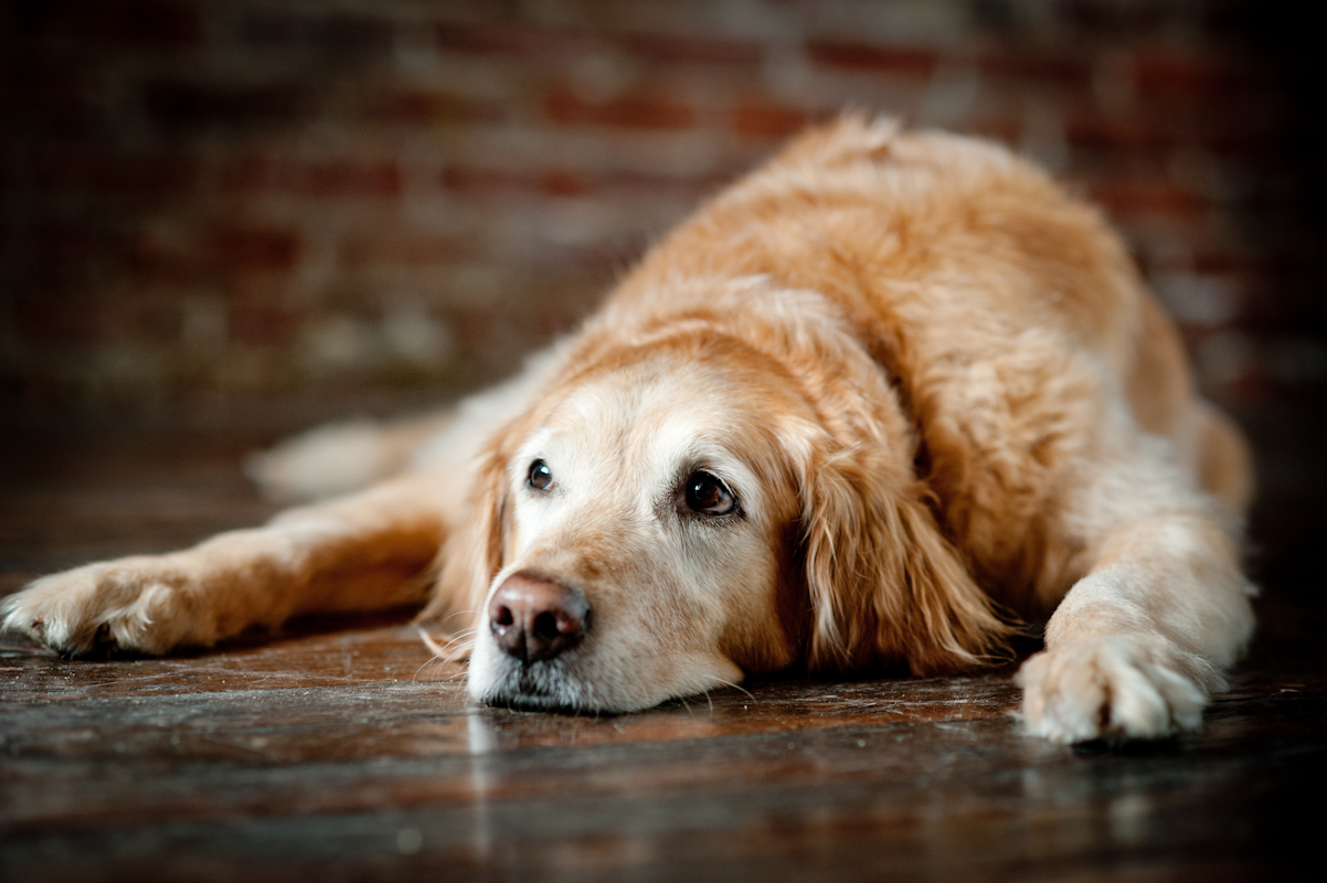 9 Things You Should Do With Your Senior Dog