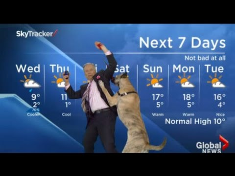 Ripple the Dog Interrupts Weather Report