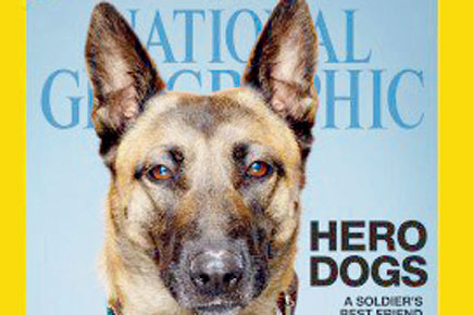 Dog Saves Soldier's Life In War Then He Saved Hers In America