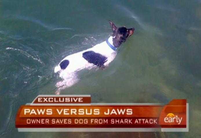 Man Punches Shark, Saves Dog