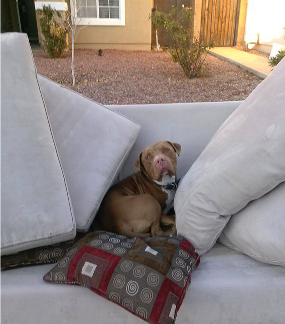 Dog Thrown Away With Couch As Trash Rescued Just In Time