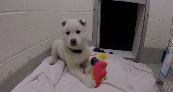 Dog Rescued From Meat Farm Plays With Toy For First Time