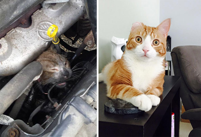 11 Incredible Photos of Dogs and Cats Before And After Rescue