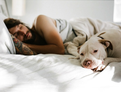 How Your Dog Sleeps May Reveal How Happy You Are As A Canine Couple