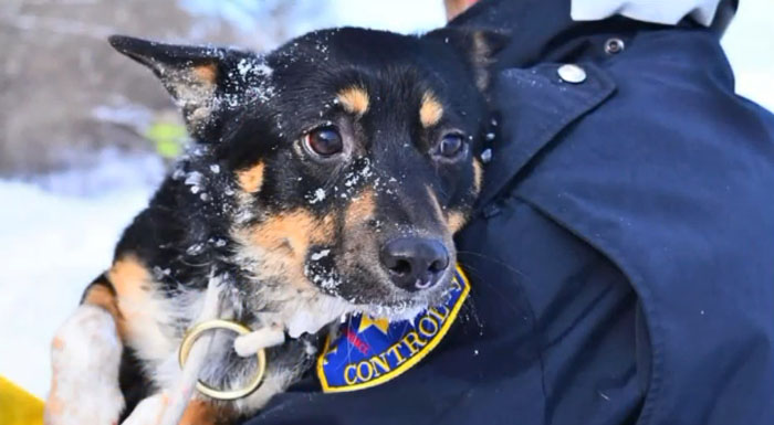 Rescuers Work 4 Hours To Save Dog Stranded On Icy Lake Michigan