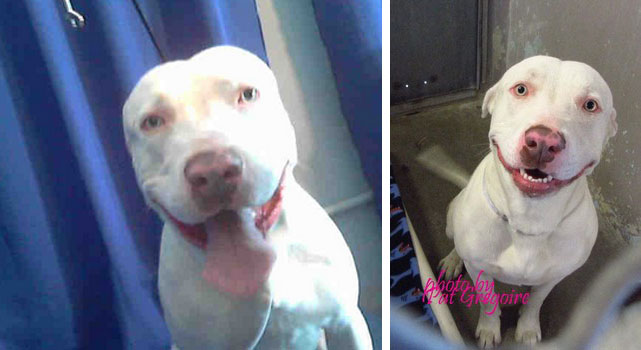 Dog Facing Imminent Death At Pound Is Trying To Smile Through It All But Needs A Home