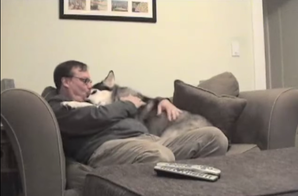 You Have To See How This Dog Greets His Owner After Work Everyday