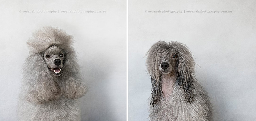 Photographer Captures The Dramatic Before And After Of Dogs At Bath Time