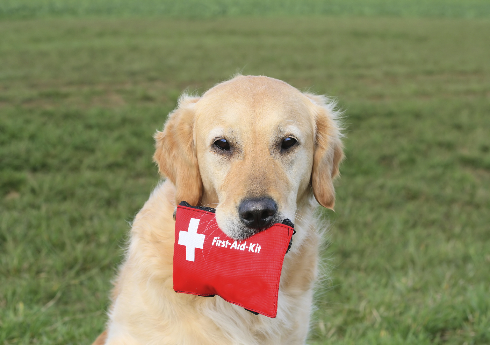 DIY Pet First Aid Kit | Pet First Aid | Pinterest |First Aid For Pets Files