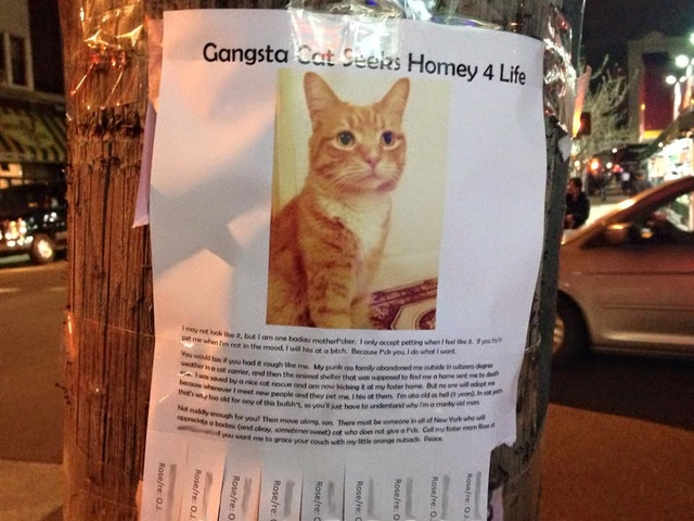 Adoption Posters for 'Gangsta Cat' Go Viral