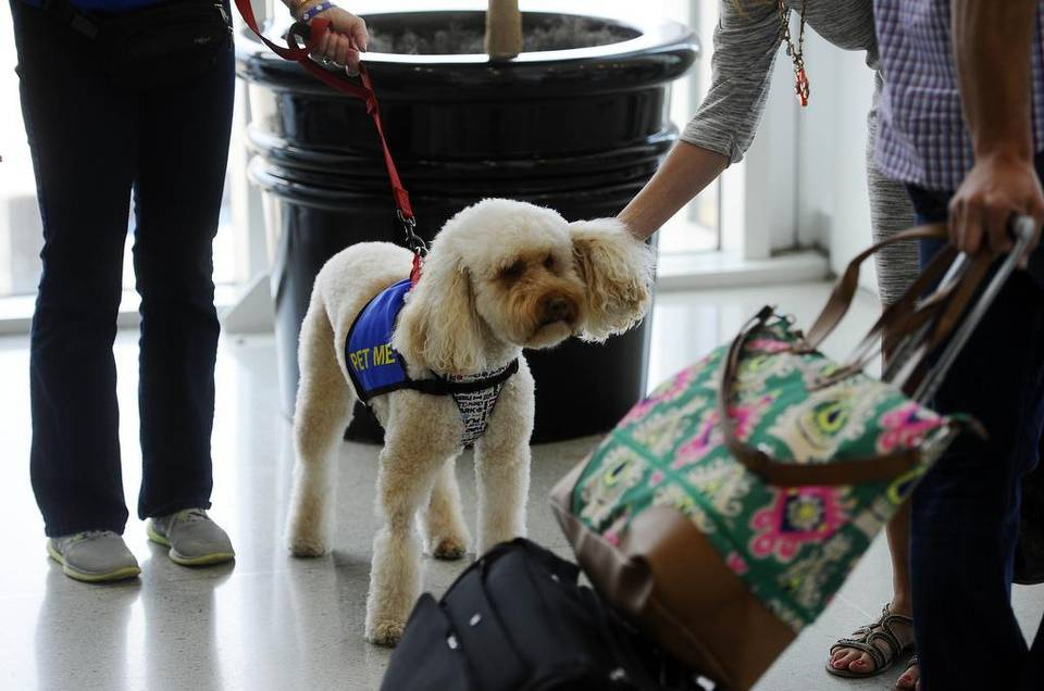 Airport Offers Dog Therapy To De-Stress Passengers