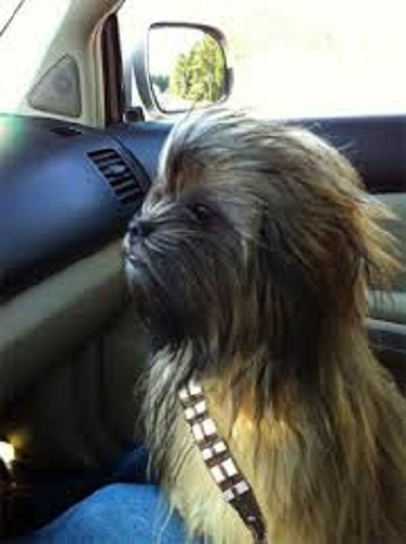 12 Dogs That Are Celebrating Star Wars Day