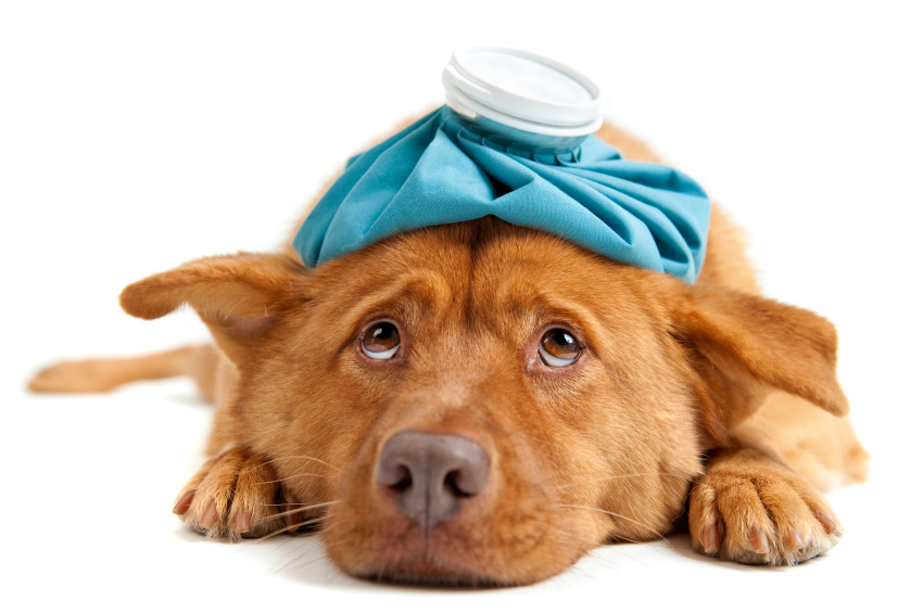 What To Do For Kennel Cough For Dogs
