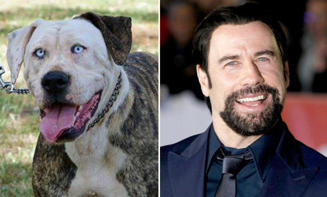 12 Dogs Who Totally Look Like Celebrities