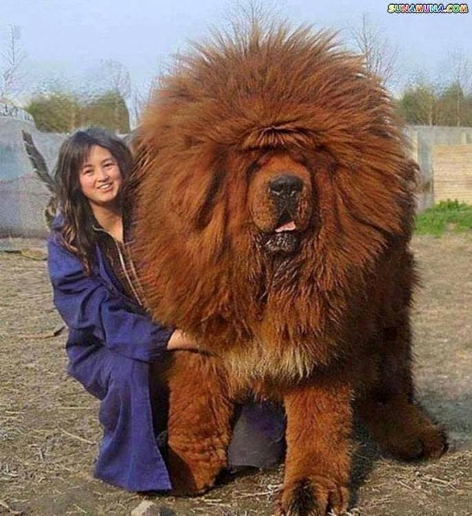 16 Of The Biggest Dogs You'll Ever See
