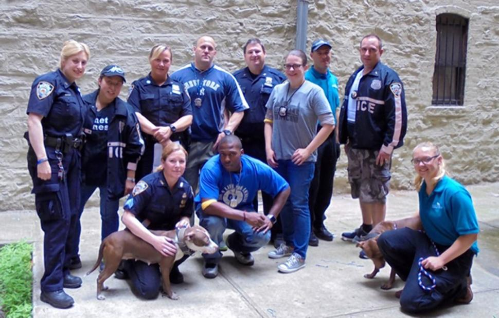 11 Pit Bulls Saved From Manhattan Dog Fighting Operation