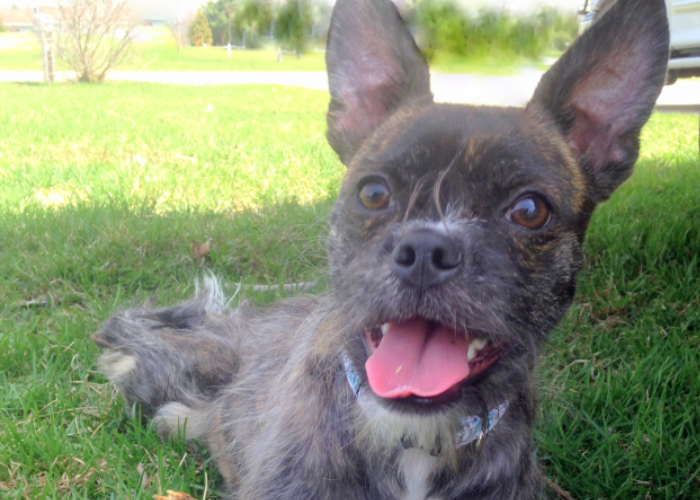 Puppy Hazel Finds A Home A Year After Truck Driver Left Her For Dead