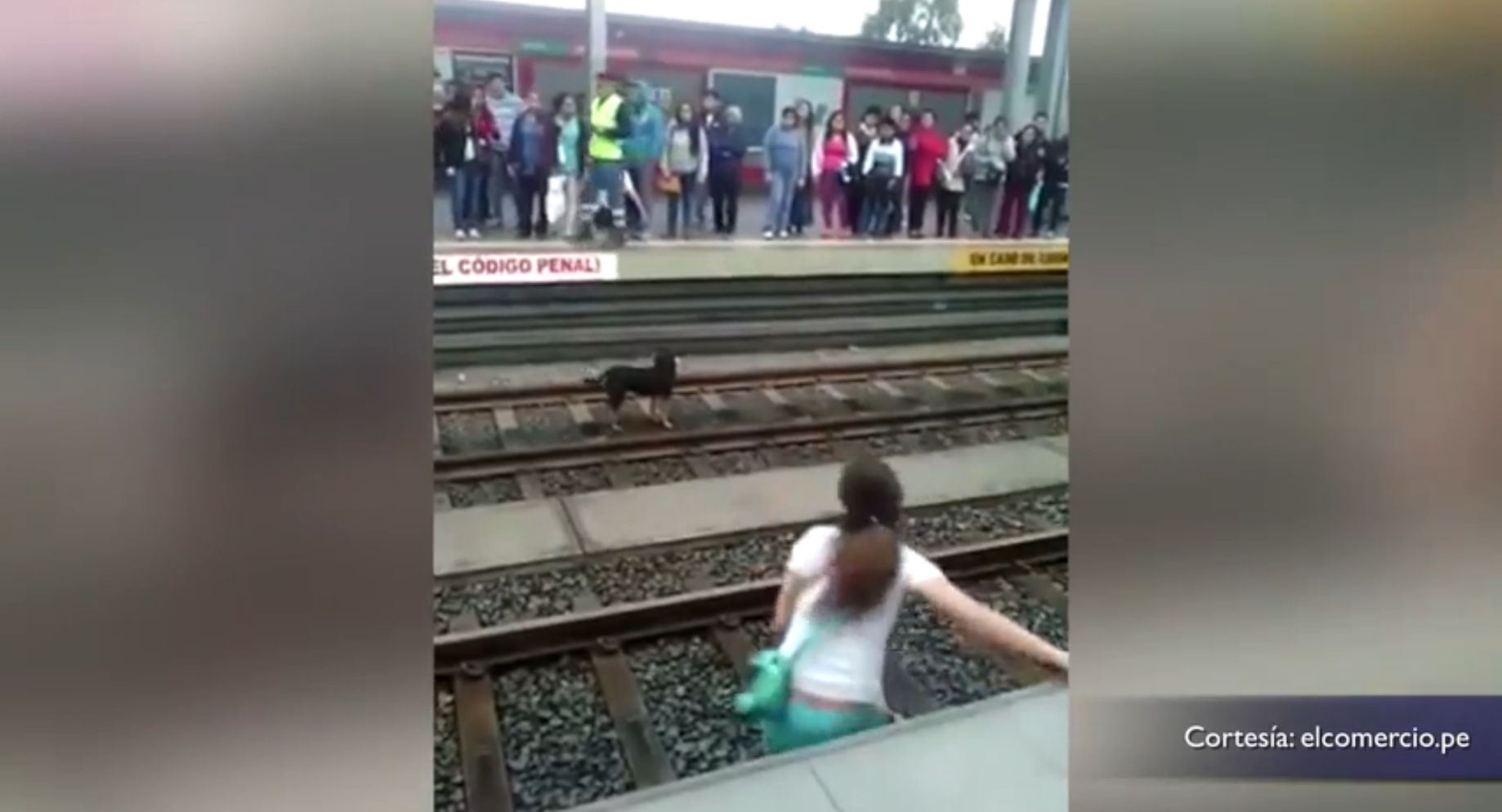 Woman Saves Dog from Train Tracks Might be Sued for her Heroics