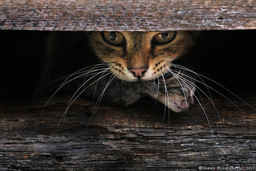 Incredible Cat Photographer Catches Cats In Private Moments