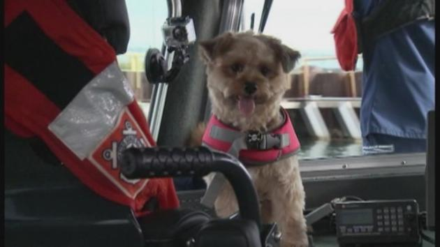 This Milwaukee Coast Guard Station Adopted A Dog As Their Mascot