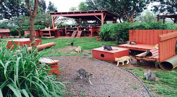 This Cat Sanctuary Is Every Cat And Cat Lover's Paradise!