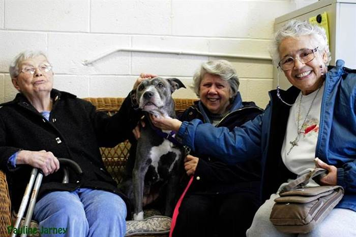 Three senior nuns gave a senior Pit Bull a loving home for the rest of her life