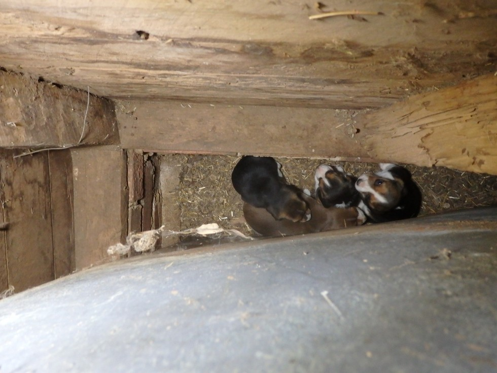 Puppy Mill Dog Hid Her Frightened Puppies Behind A Wall For Safety