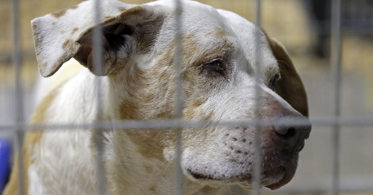 This Shelter is Putting Down Dogs by Shooting them