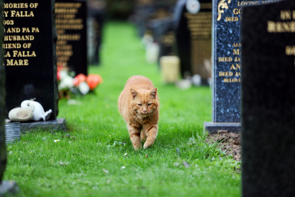 Barney The Cemetery Cat Passed Away And He's Getting His Own Plaque