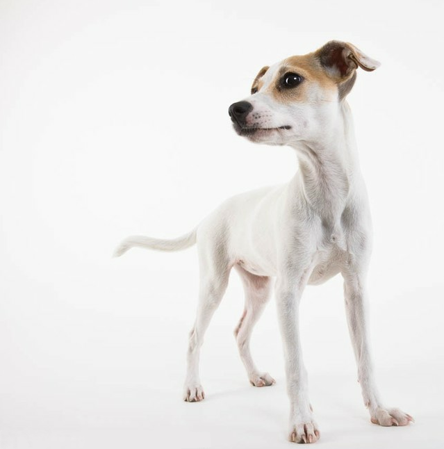 Exclusive Interview with Dog Photographer, Michael Kloth, on Dogbook